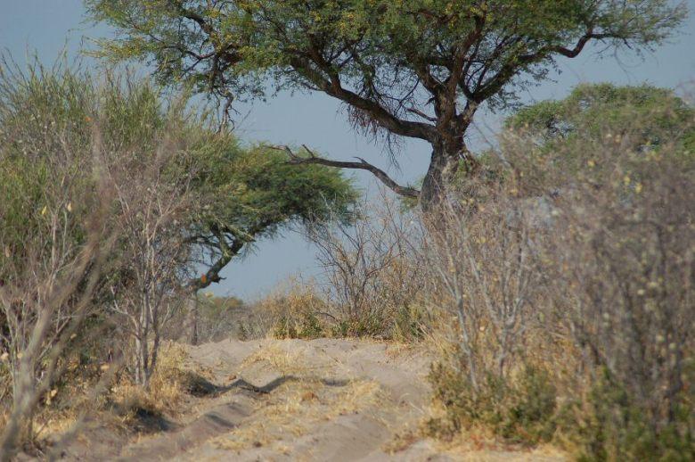 Botswana - ExplorationVacation - 09-22_07-38-01 roadway