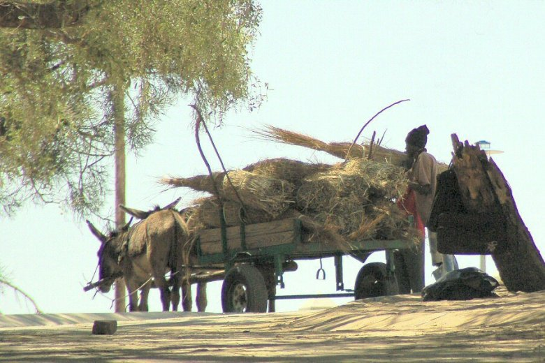 Botswana Okavango - ExplorationVacation - 09-17 donkey cart
