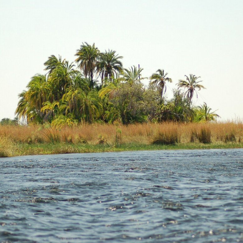Botswana Okavango - ExplorationVacation - 09-17 palms along river