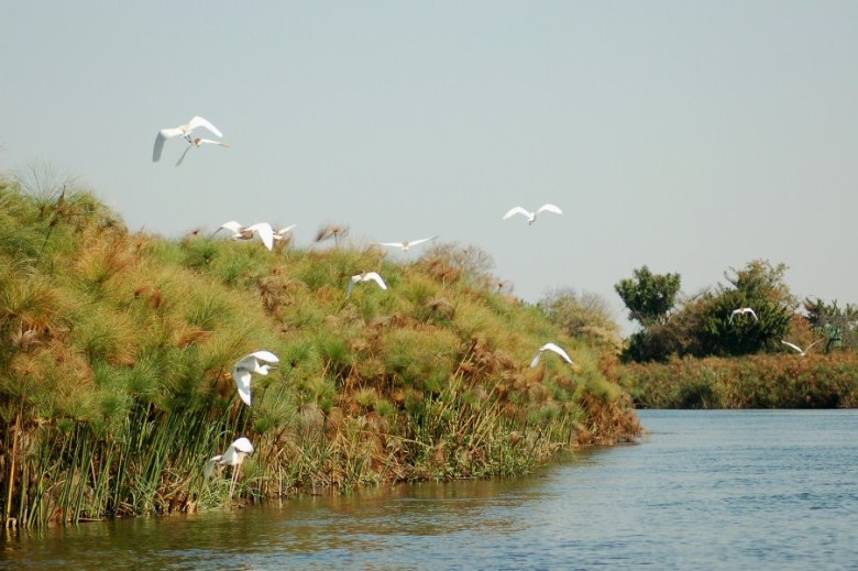 Botswana Okavango - ExplorationVacation - 09-19 birds on the river
