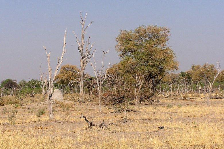 Moremi Botswana - ExplorationVacation - P1010099 9-21 where there were elephants