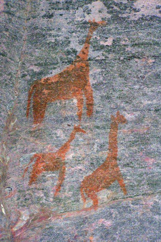 Tsodilo Hills Botswana - ExplorationVacation - P9150132 giraffe