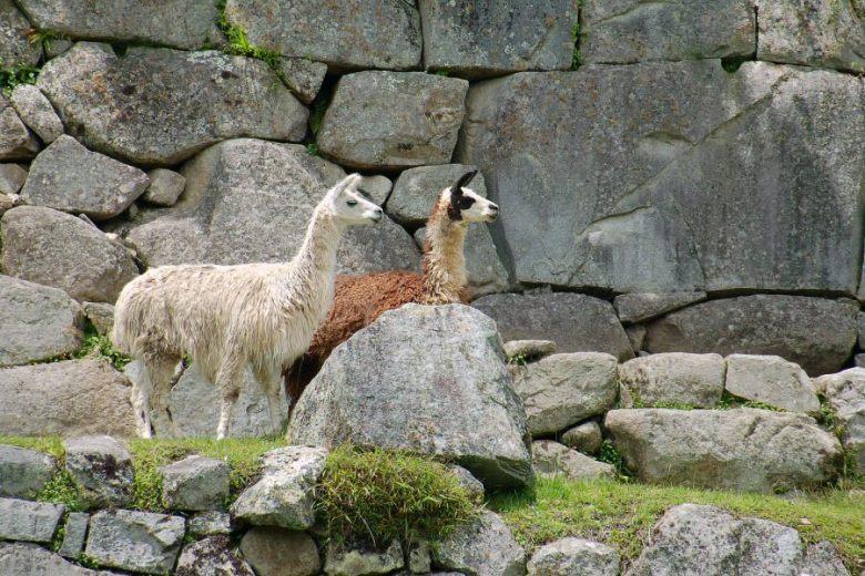 Machu Picchu Peru - ExplorationVacation 2005-12-31_11_04_45
