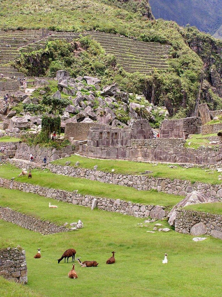 Machu Picchu Peru - ExplorationVacation P1010136
