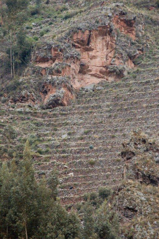 Peru - ExplorationVacation 2006-01-01_15_54_21%20terracing