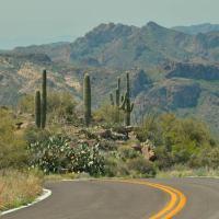 Apache Trail with saguaros Arizona - www.ExplorationVacation.net