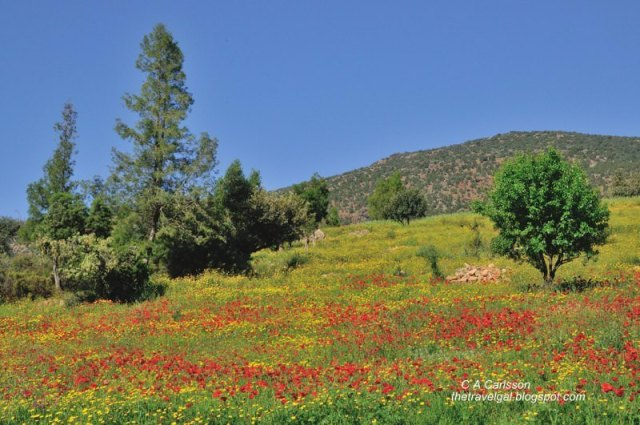 Hillside with poppies