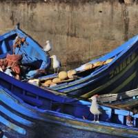 Blue Boats in Essaouira, Morocco