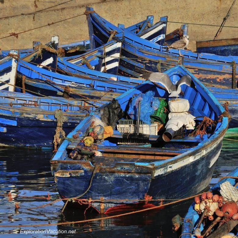 Essaouira fishing 12 DSC_8249 Morocco