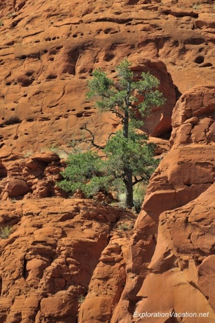 Sedona DSC_4239 Arizona