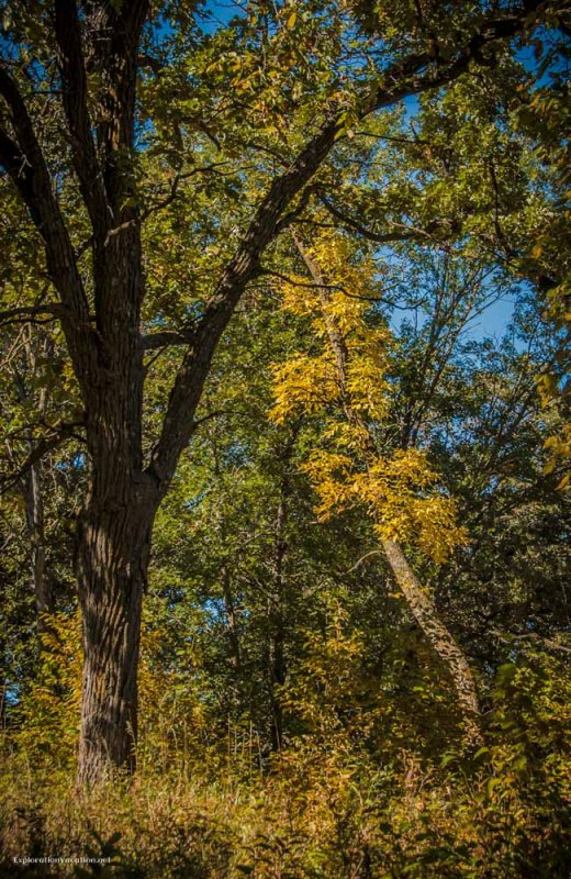 fall at Sibley State Park in Minnesota - ExplorationVacation.net