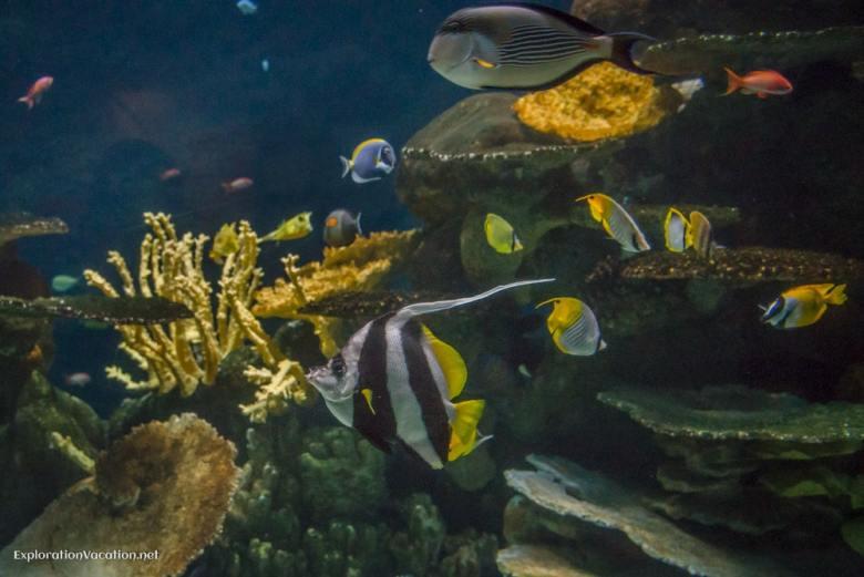 Tropical reef fish at the Minnesota Zoo - ExplorationVacation.net