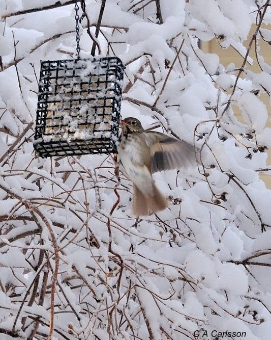 Backyard bird - ExplorationVacation.net