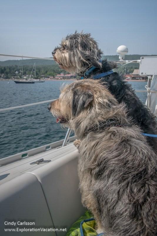 sailing dogs - ExplorationVacation