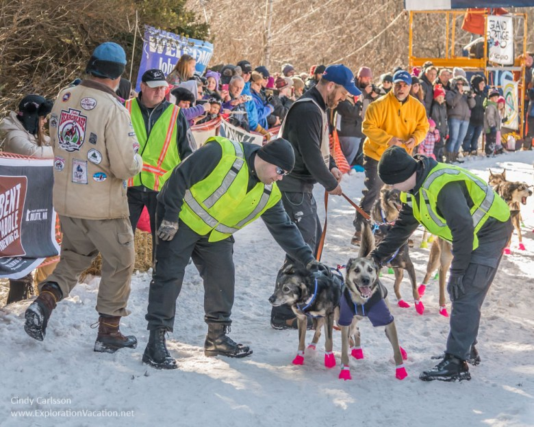 dogs at the starting gate