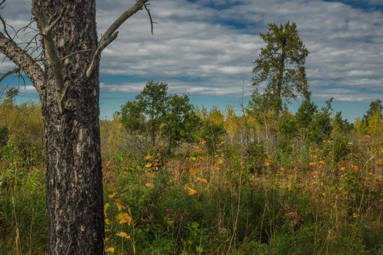 Saint Croix State Park Minnesota - www.ExplorationVacation.net