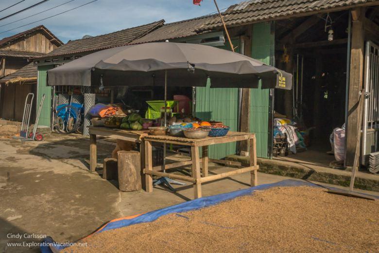 Rice - Northern Vietnam road trip - ExplorationVacation