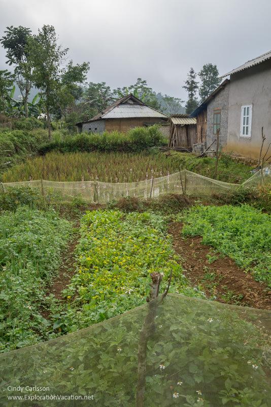 Bo Y village - Northern Vietnam road trip - ExplorationVacation