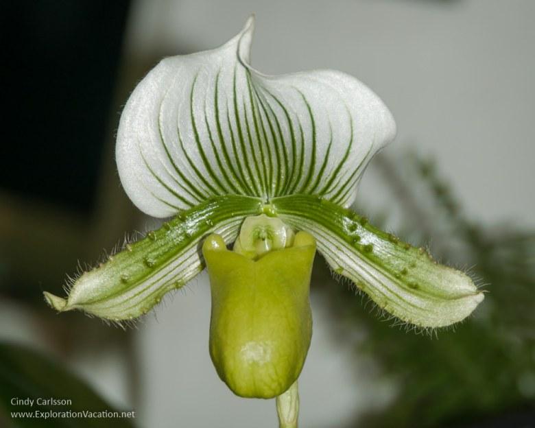 Minnesota state fair favorites - orchids - www.ExplorationVacationnet