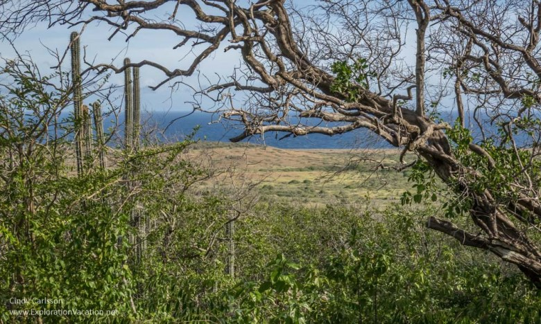view near Zorgvlied Ruins in Christoffel National Park Curacao - ExplorationVacation.net