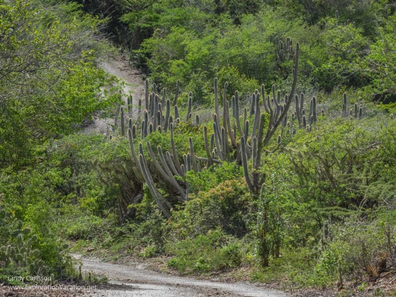 Mountain Route in Christoffel National Park Curacao - ExplorationVacation.net