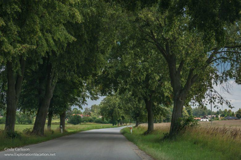 Tree-line lane in rural Czechia (Czech Republic)