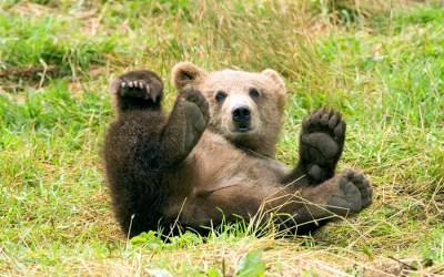 Bear Spray Saves man's Life