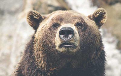 Do I really need bear spray in Yellowstone?