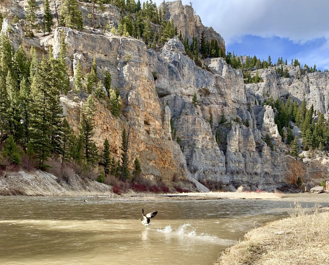 smith river rentals in Bozeman, MT