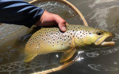 Summer Fishing in Montana
