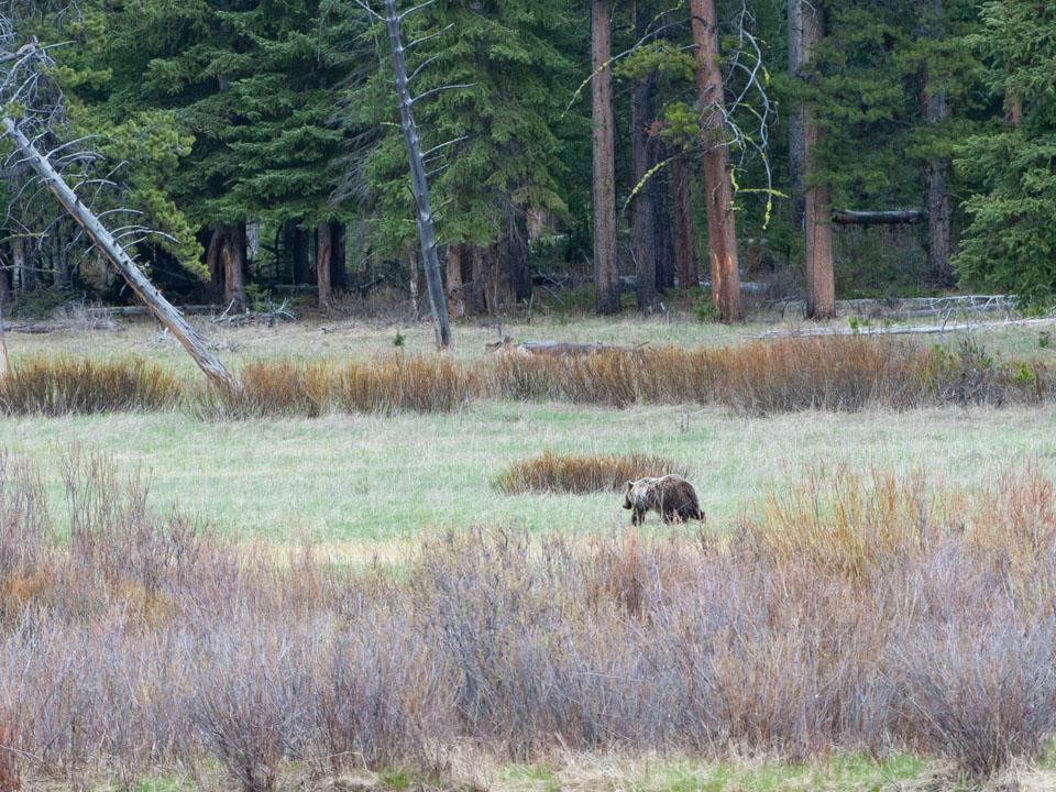 bear spray rentals in bozeman, MT