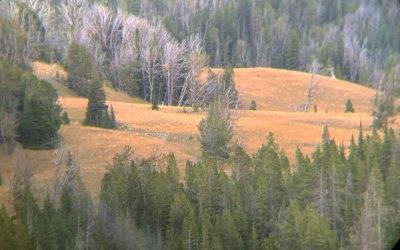 Important Pieces for a DIY Montana Elk Hunt