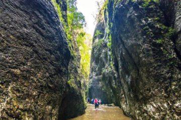 Canyon Beli Rzav