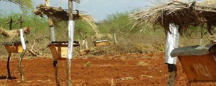 The Scientific and Medical Network members sponsor Bee Fences in Kenya
