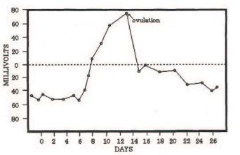 The electrical rhythm of the ovulation cycle in the human female as recorded between a finger from each hand. Before and after ovulation the potentials are nagative. About 5-6 days before ovulation, the potential begins to rise and increases above zero a few days before ovulation. Afterwards there is a rapid decline to below zero, at which time the body is free of a fertilizable ovum. The curve is taken from US Patent 3,924.609 Reprinted from Energy Medicine by James Oschman, Churchill Livingstone, 2000.