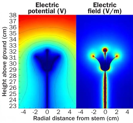Electrical field of flower