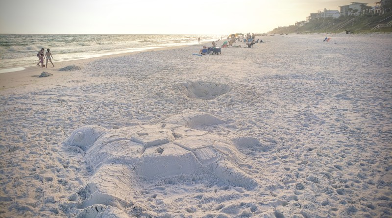 Save the Sea Turtles Nesting on 30A Beaches