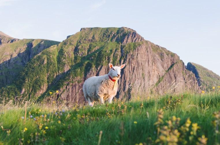 Eggum Lofoten - Amanda Matti © explorealittlemore.se