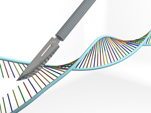 7 Important Molecular Tools in Genetic Engineering