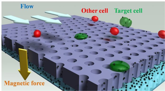 This schematic depicts a new system that uses tiny magnetic beads to quickly detect rare types of cancer cells circulating in a patient's blood, an advance that could help medical doctors diagnose cancer earlier than now possible and monitor how well a patient is responding to therapy. (Purdue School of Mechanical Engineering image/ Bin-Da Chan)