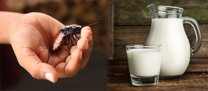 insect-cockroach-milk-735-350-735x322