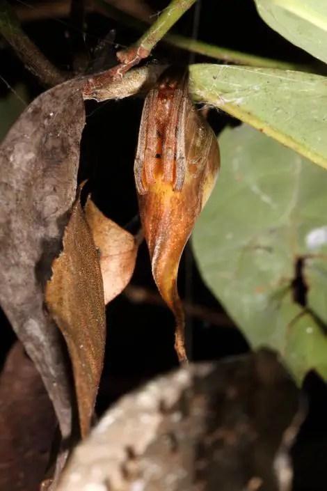 leaf-spider-01-ngsversion-1479303011307-adapt-470-1