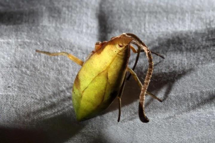 leaf-spider-02-ngsversion-1479303009221-adapt-945-1