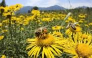 About Yellow Biotechnology