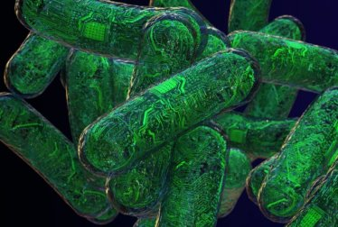 Artificial Bacterial Genome Using Computer