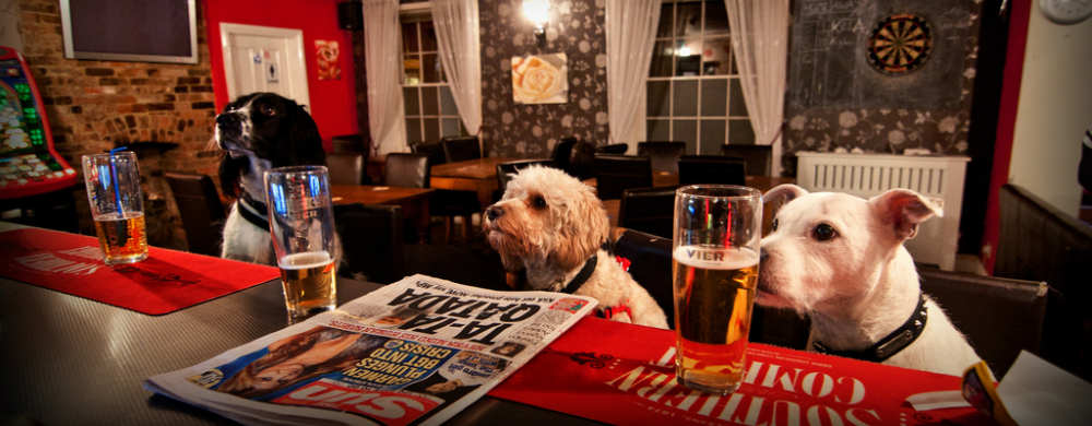 Dog Friendly Pubs Bars And Cafes In Buxton Our Top 10