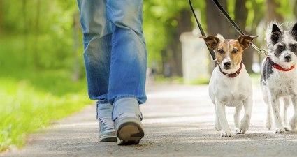 Social Dog Walk Buxton