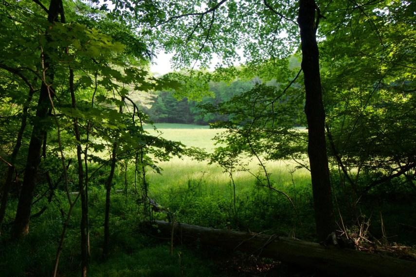 Field at Torrey Preserve