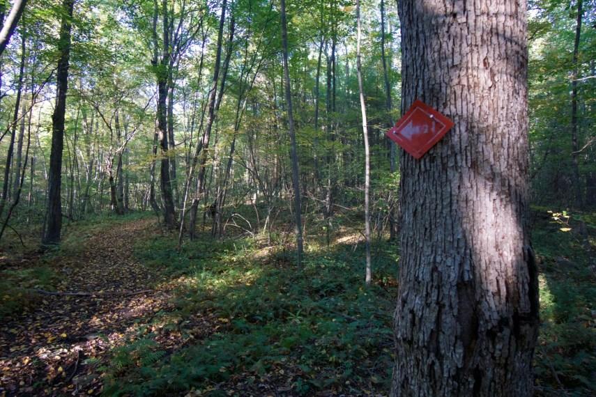 Nipmuck Forest Trial Marker