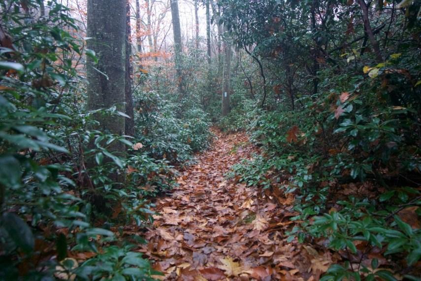 Shenipsit Mountain Laurel